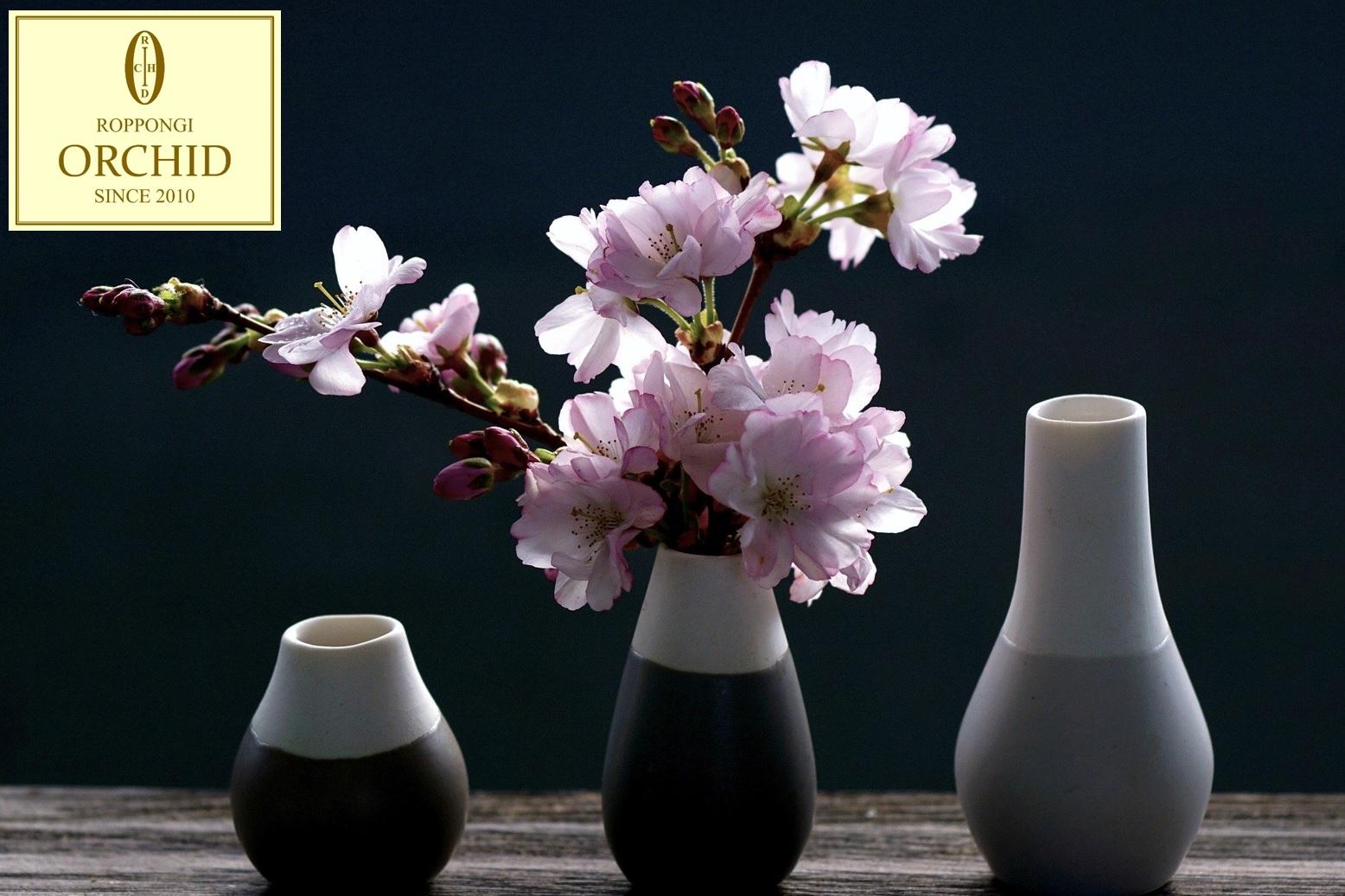 桜のように美しい交際クラブ